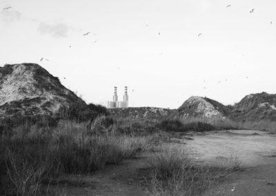 Seagull Land